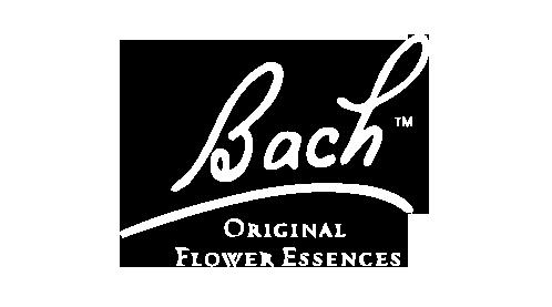 bach-logo.png